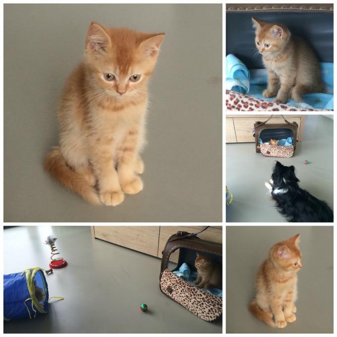 nieuwe kitten