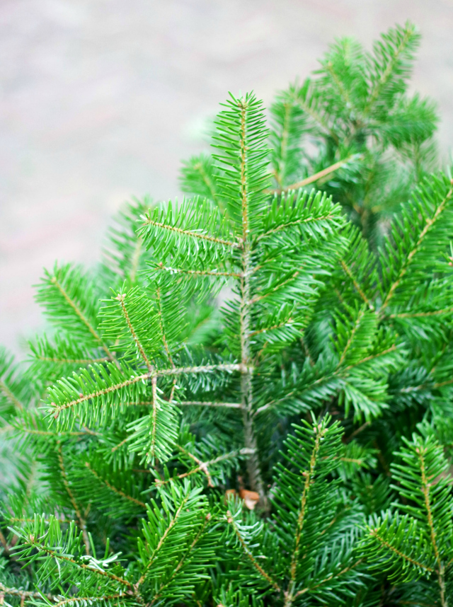 recept-kerstboom-van-bladerdeeg-met-pesto-2