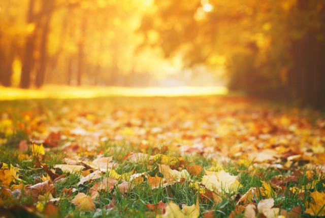 Herfst: tijd voor onderhoud in en om het huis