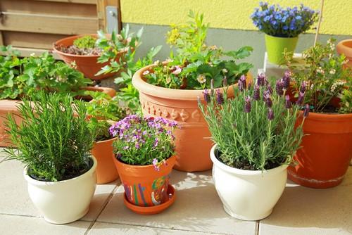 5 tips om bloempotten te combineren in de tuin